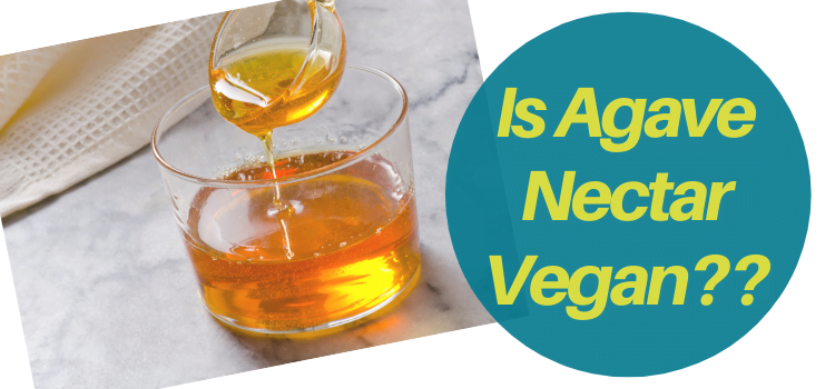 Is Agave Syrup Vegan?